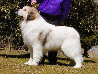 マーキング犬 成犬
