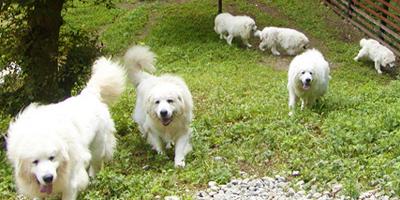 大型犬にとって最適な環境