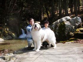 グレートピレニーズ親犬カイナとブリーダー