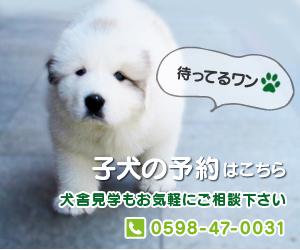 子犬の予約 犬舎見学もお気軽にご相談下さい