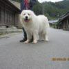 兵庫県からモコちゃんのお里帰りです。